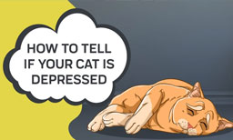 How To Tell If Your Cat Is Depressed
