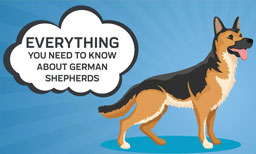 everything you need to know about german Shepherds