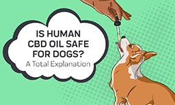 is human cbd oil safe for dogs