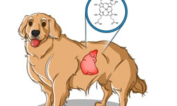 New Research: Aggression Linked to Gut Microbes of Some Rescue Dogs