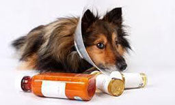 cbd oil helping our pets