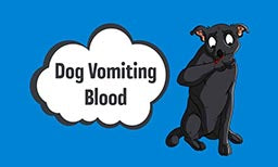 Why Is My Dog Vomiting Blood? Causes, Prevention, & Treatments
