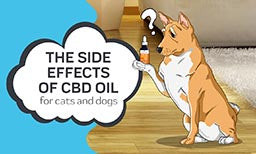 side effects of cbd oil for dogs and cats