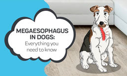 everything you need to know about megasophagus