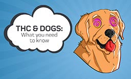 thc and dogs what you need to know