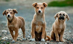 Wild Dog Packs Teach Us Fascinating Things About Canine Aggression