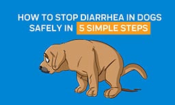 How to Stop Diarrhea in Dogs Safely: Learn To Treat Your Dogs in 5 Simple Steps