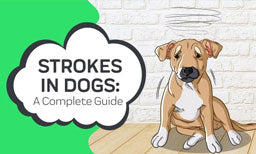 Strokes In Dogs: A Complete Guide