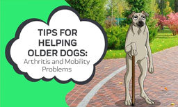Tips For Helping Older Dogs with Arthritis and Mobility Problems