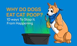 Why Do Dogs Eat Cat Poop? 10 ways To Stop It From Happening