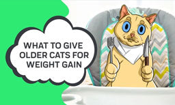 What to Give Older Cats for Weight Gain