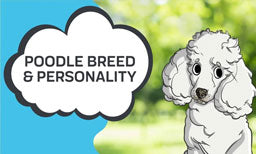 poodle personality