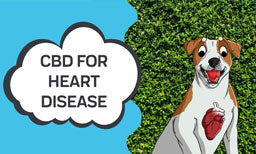 how cbd can help with heart disease