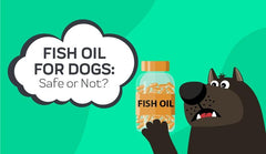 Fish Oil for Dogs: Safe or Not?