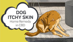 Dog Itchy Skin Home Remedy in CBD: A Natural Alternative