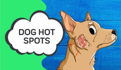 Hot Spots On Dogs : What To Look For And How To Treat Them