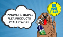 Innovet's All-Natural BioPel Flea Products Really Work