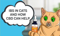 ibs in cats and how cbd can help