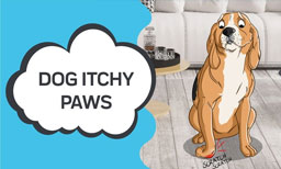 Dog Itchy Paws