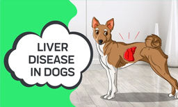 liver disease in dogs