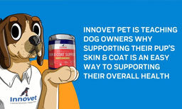 Here's Why We Need To Support Our Dogs' Skin & Coat