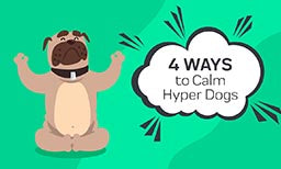 4 Ways to Calm Hyper Dogs