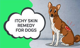 Itchy Skin Remedy For Dogs