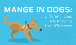 Mange in Dogs: Different Types and Knowing The Differences
