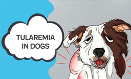 tularemia in dogs