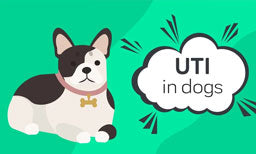 unti in dogs