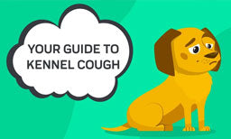 guide to kennel cough