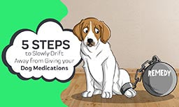 5 steps to ween your dog off medications
