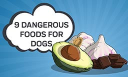 9 Dangerous Foods for Dogs