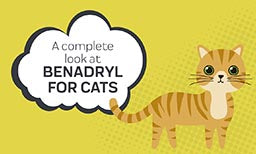 A Complete Look At Benadryl For Cats