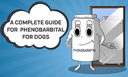 A Complete Guide To Phenobarbital For Dogs