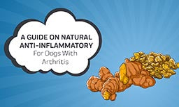 guide on natural anti-inflammatory for dogs with arthritis