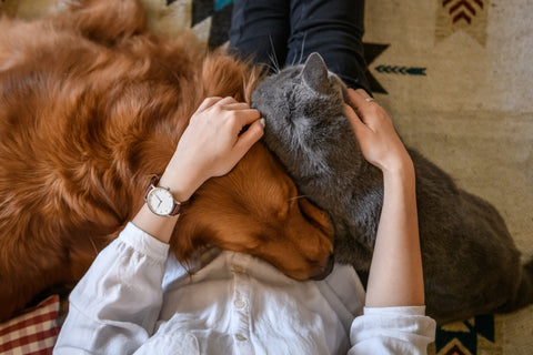 How Petting Effects Our Dogs (and Us) Physiologically
