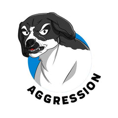 CBD for Agression in Dogs Scientific Research and Clinical Trials