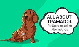 Tramadol for dogs including alternatives