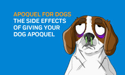 Apoquel for Dogs - The Side Effects Of Giving Your Dog Apoquel