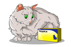 Atopica for Pets: Medication Do's and Do Not's | Innovet Pet