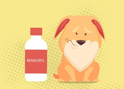 Benadryl For Dogs: Dosages And Warnings
