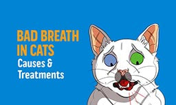 get rid of cats bad breath