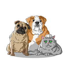 Brachycephalic syndrome in dogs and cats on planes | Innovet Pet