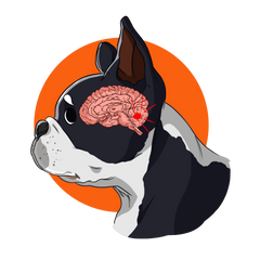 Brain Tumors in Dogs | Innovet