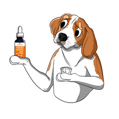 A Guide To Finding Your Dog the Best CBD Treats | Innovet Pet