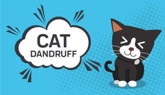 Cat Dandruff Guide