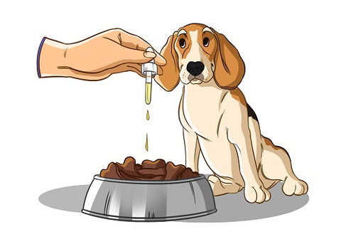Adding CBD drops to dog's food