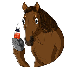 Can CBD Help Your Horse?