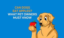 Can Dogs Eat Apples? What Pet Owners Must Know